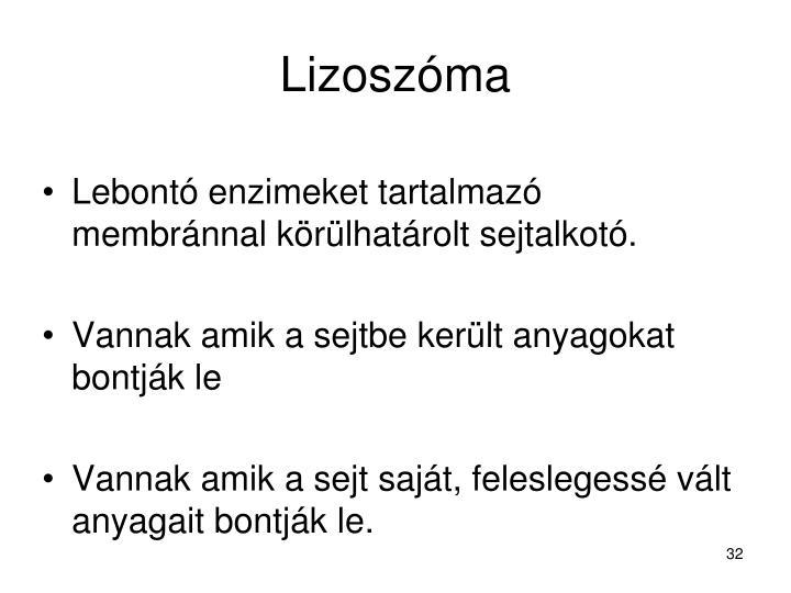 Lizoszóma