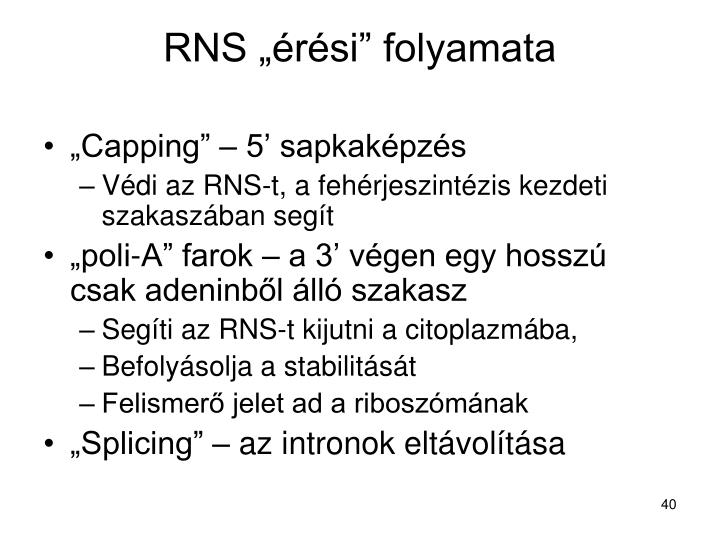 """RNS """"érési"""" folyamata"""