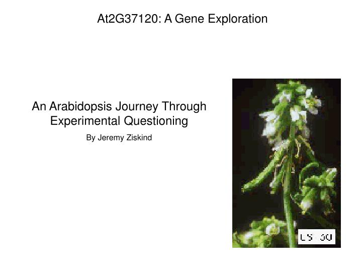 At2G37120: A Gene Exploration