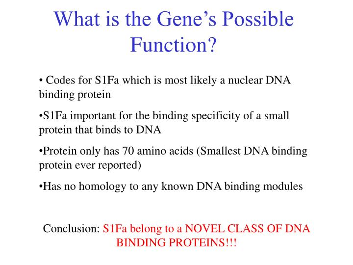What is the gene s possible function