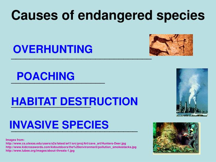 Causes of endangered species