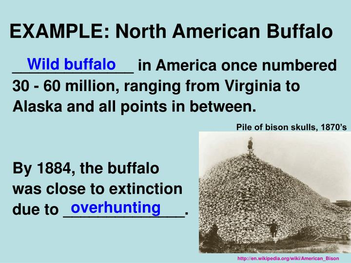 EXAMPLE: North American Buffalo