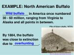 example north american buffalo