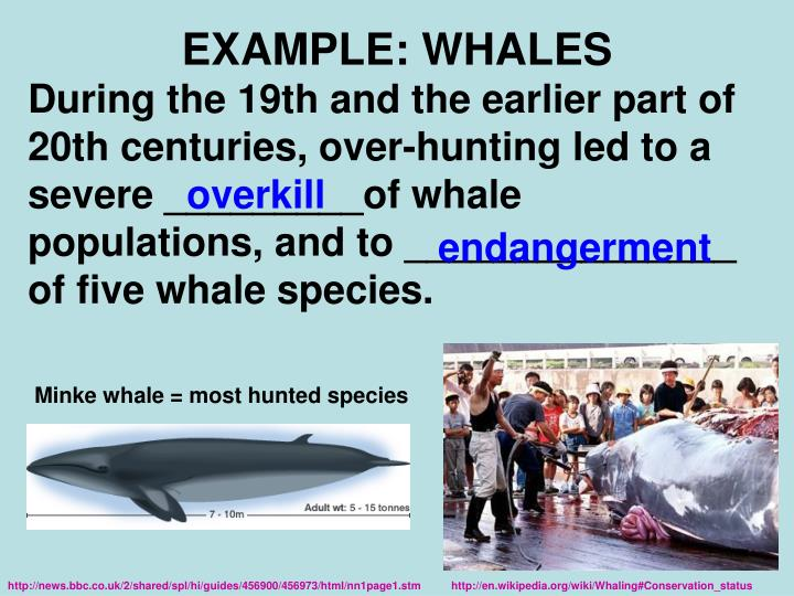 EXAMPLE: WHALES