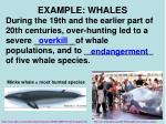example whales