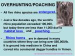 overhunting poaching