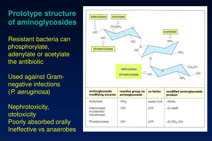 Prototype structure of aminoglycosides