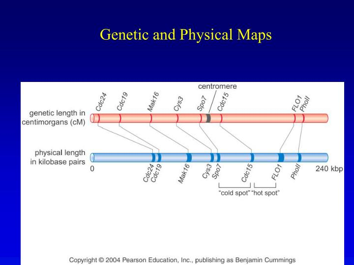 Genetic and Physical Maps