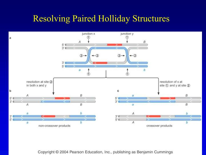 Resolving Paired Holliday Structures