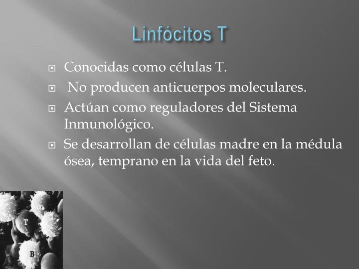 Linfócitos