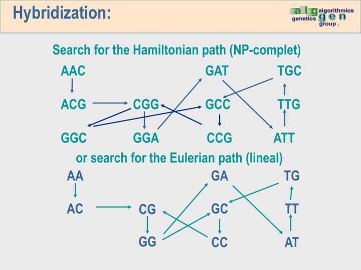 Hybridization: