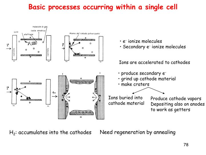 Basic processes occurring within a single cell