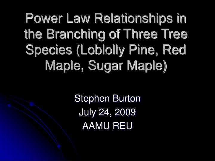 Power Law Relationships in the Branching of Three Tree Species (Loblolly Pine, Red Maple, Sugar Maple)