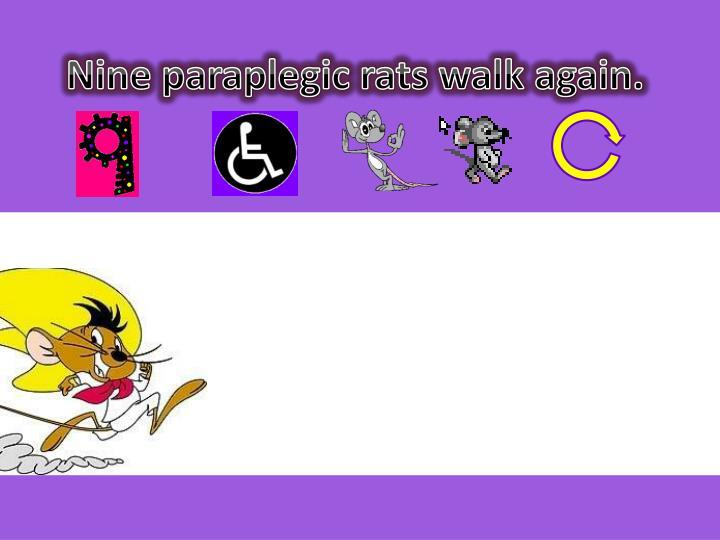 Nine paraplegic rats walk again.