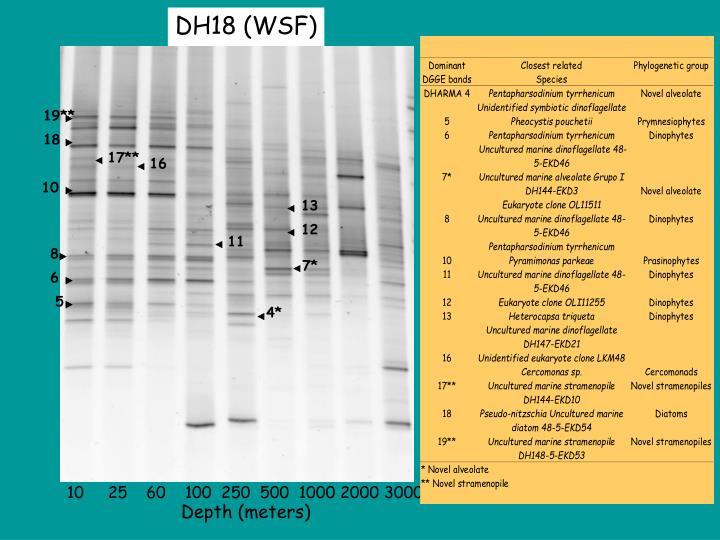 DH18 (WSF)