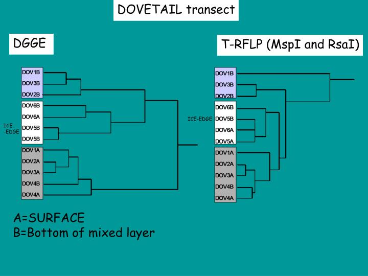 DOVETAIL transect