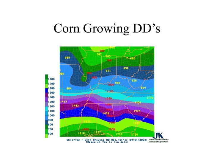 Corn Growing DD's
