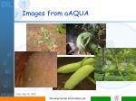 images from aaqua