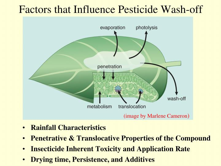 Factors that Influence Pesticide Wash-off