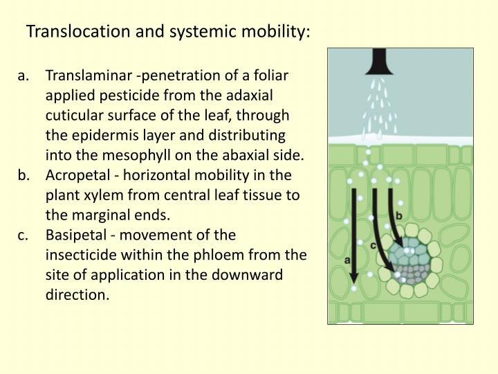 Translocation and systemic mobility: