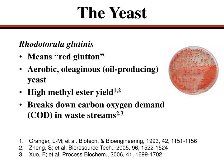 The Yeast