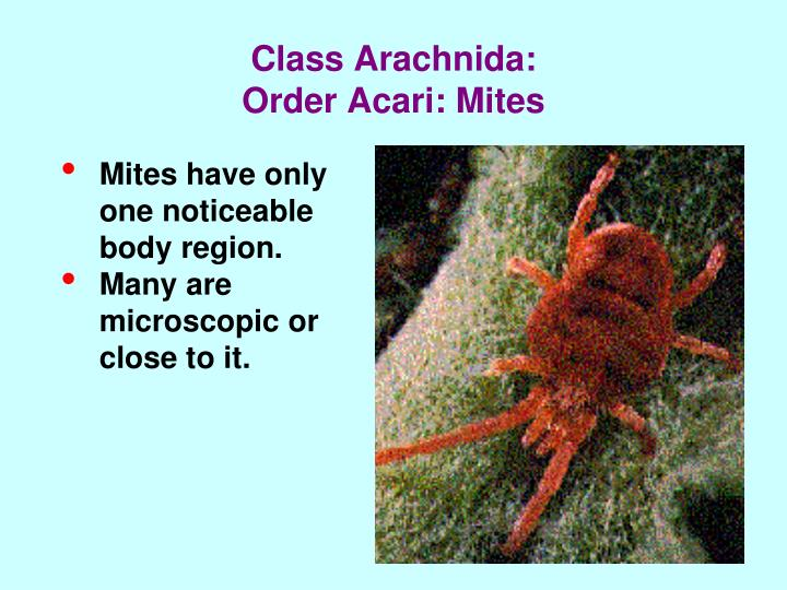 Class Arachnida: