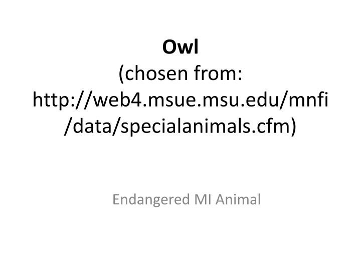 Owl chosen from http web4 msue msu edu mnfi data specialanimals cfm