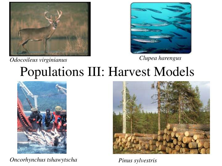 Populations III: Harvest Models