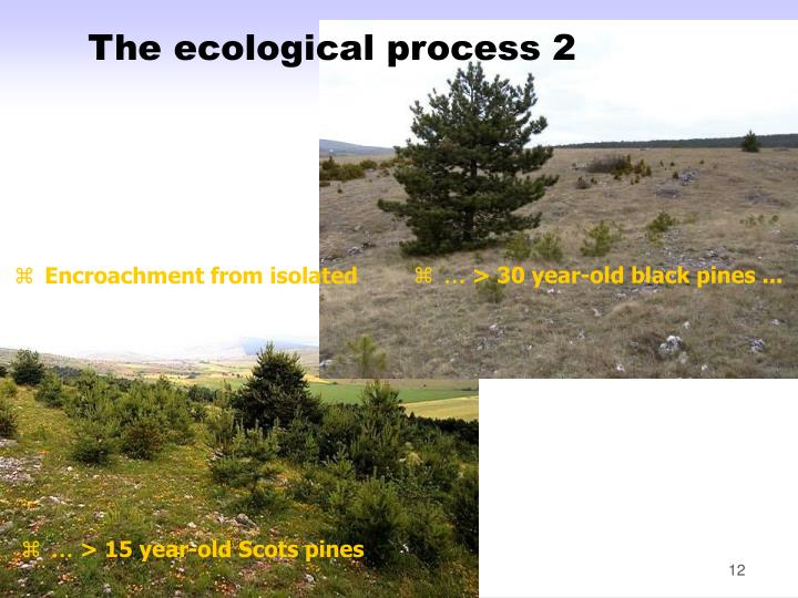 The ecological process 2