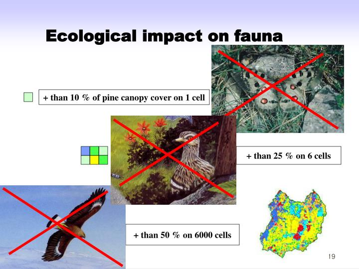 Ecological impact on fauna