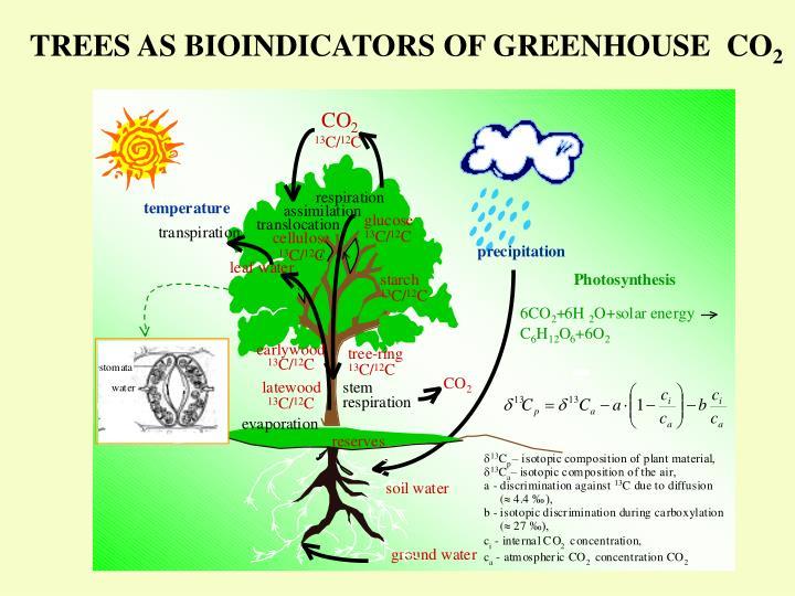 TREES AS BIOINDICATORS OF GREENHOUSE  CO
