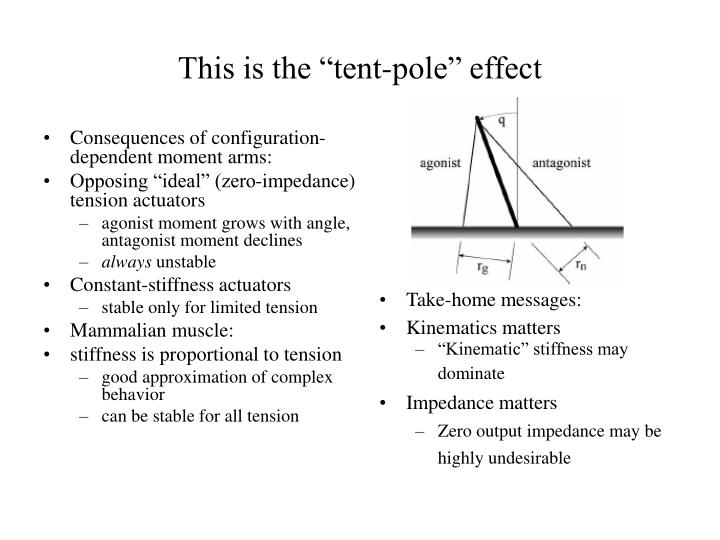 "This is the ""tent-pole"" effect"