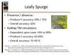 leafy spurge1