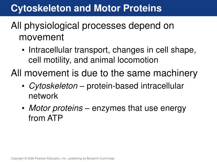 Cytoskeleton and motor proteins