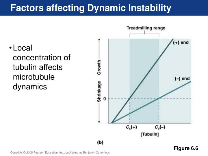 Factors affecting Dynamic Instability