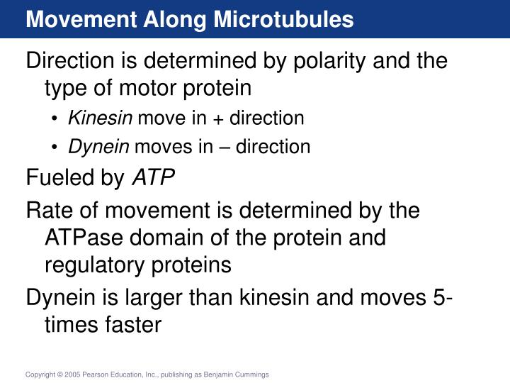 Movement Along Microtubules