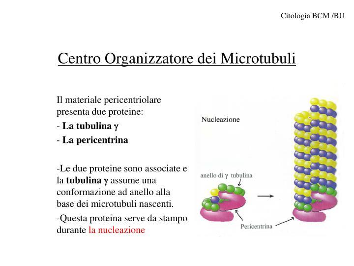 Citologia BCM /BU