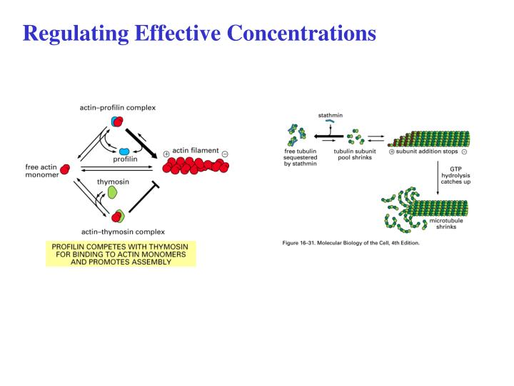 Regulating Effective Concentrations