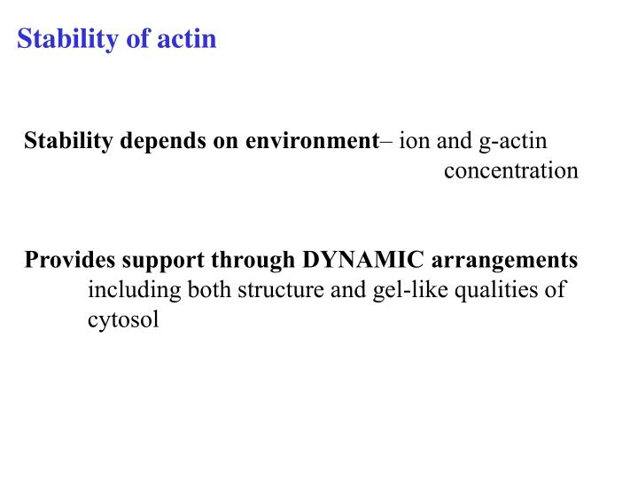Stability of actin