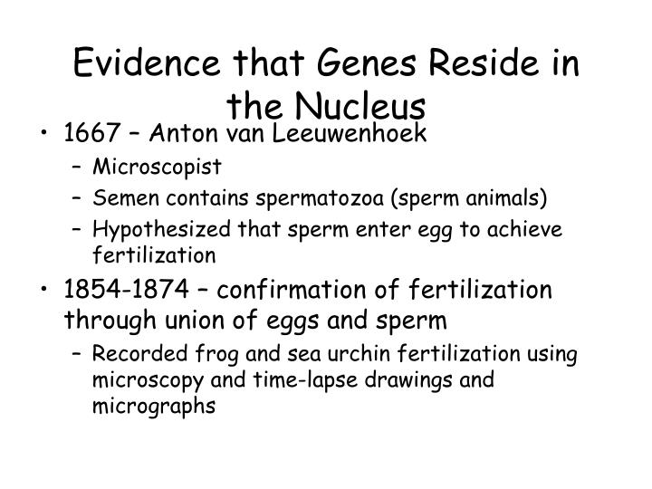 Evidence that Genes Reside in the Nucleus