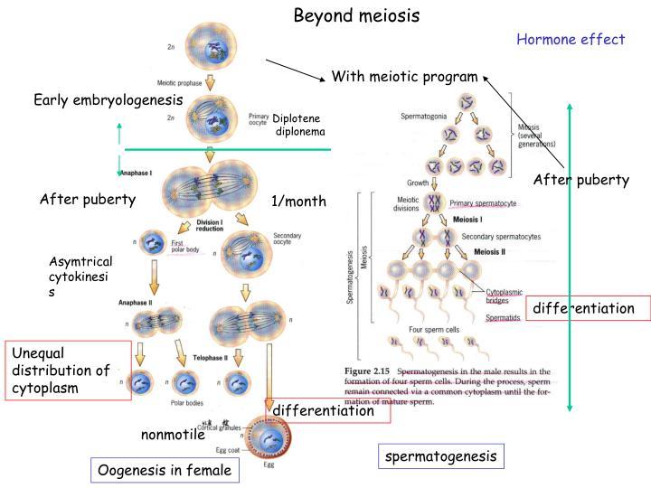 Beyond meiosis