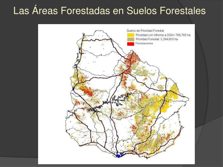 Las Áreas Forestadas en Suelos Forestales