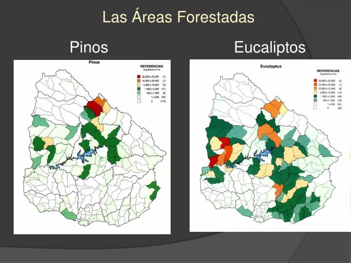 Las Áreas Forestadas