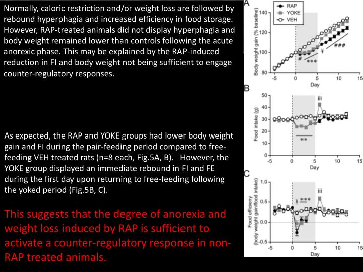 Normally, caloric restriction and/or weight loss are followed by rebound hyperphagia and increased efficiency in food storage. However, RAP-treated animals did not display hyperphagia and body weight remained lower than controls following the acute anorexic phase. This may be explained by the RAP-induced reduction in FI and body weight not being sufficient to engage counter-regulatory responses.