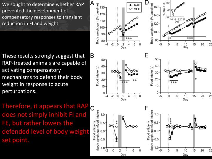 We sought to determine whether RAP prevented the development of compensatory responses to transient reduction in FI and weight