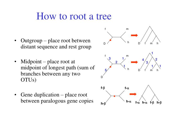 How to root a tree
