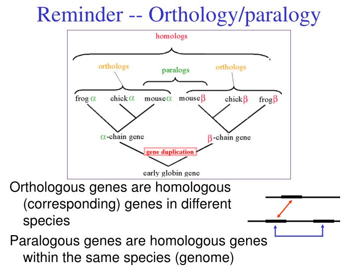 Reminder -- Orthology/paralogy