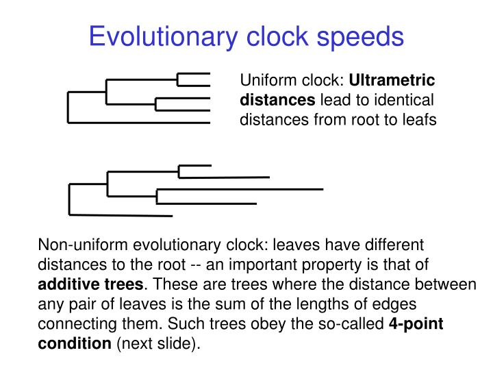 Evolutionary clock speeds