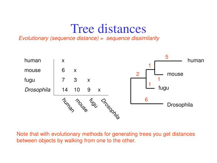 Tree distances