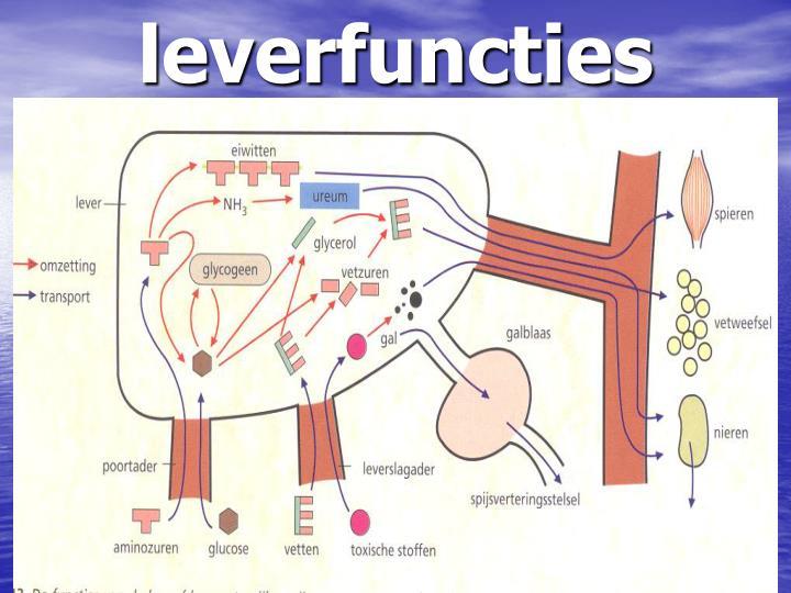 leverfuncties